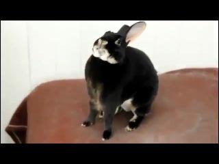 Кричащий кроль)